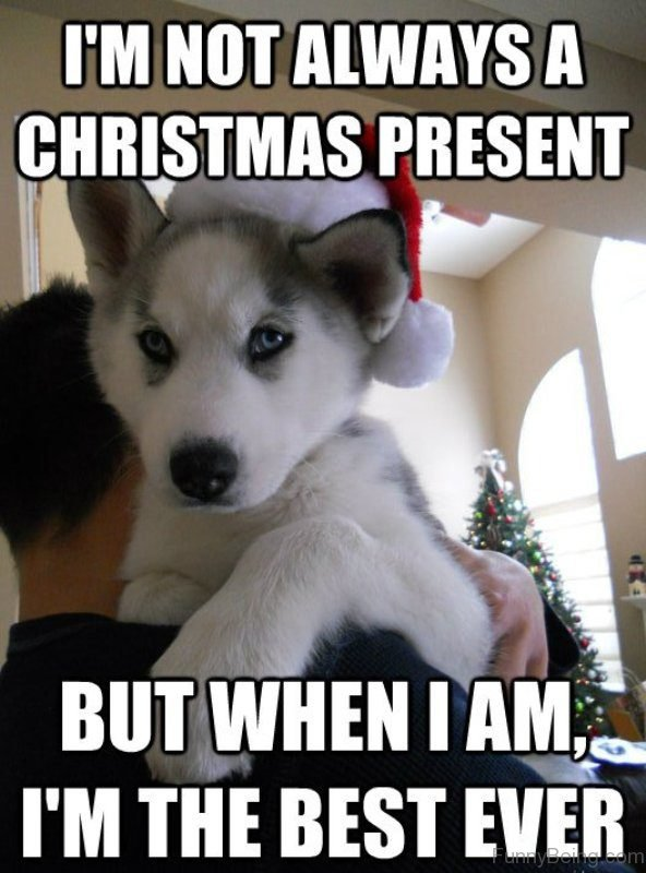 I'm Not Always A Christmas Present