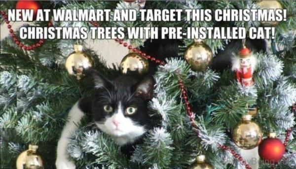New At Walmart
