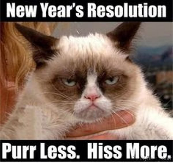 Purr Less Hiss More