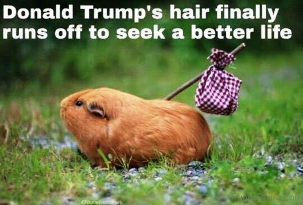 Donald Trumps Hair Finally