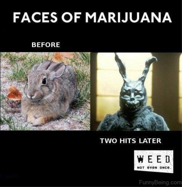 Funny Cat Drug Memes