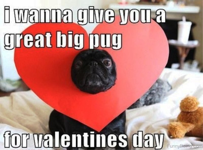 Funny Memes About Being Single On Valentines Day : Best valentines day memes for you
