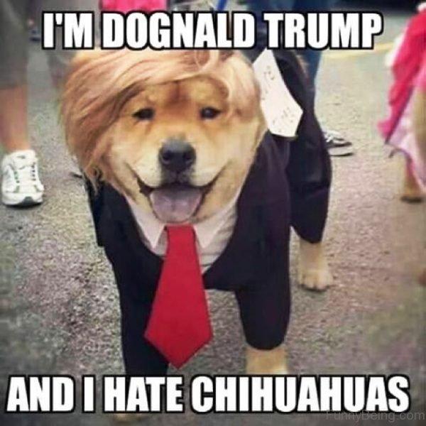 Im Dognald Trump
