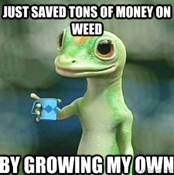 Just Saved Tons Of Money On Weed