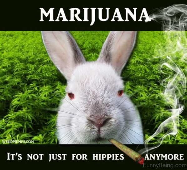 Marijuana Its Not Just For Hippies