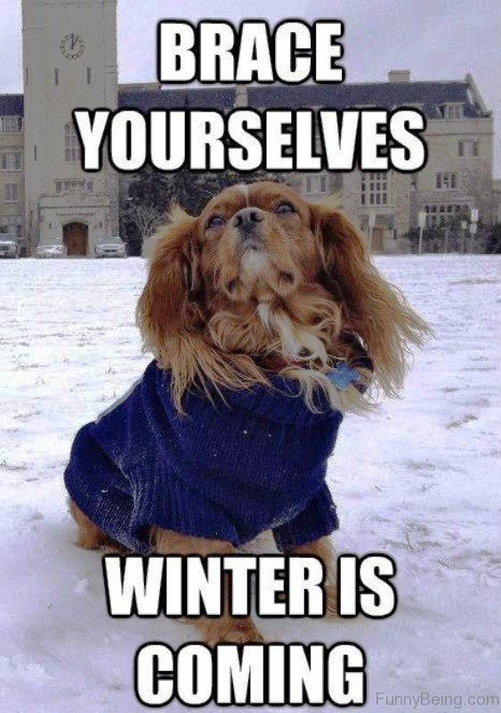 80 Super Cool Winter Memes