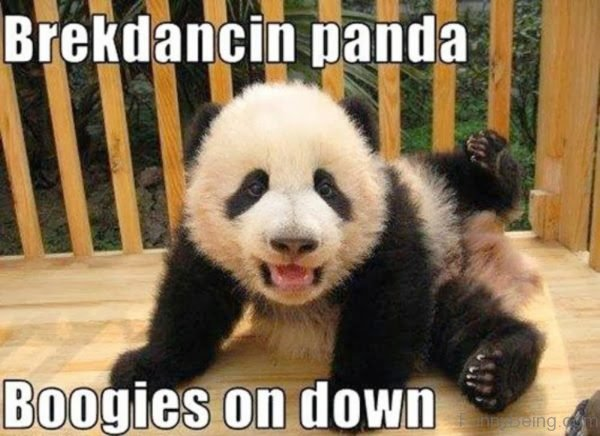 Breakdancing Panda
