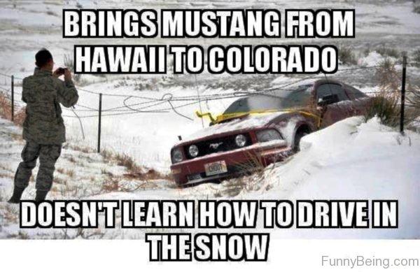 Brings Mustang From Hawaii To Colorado