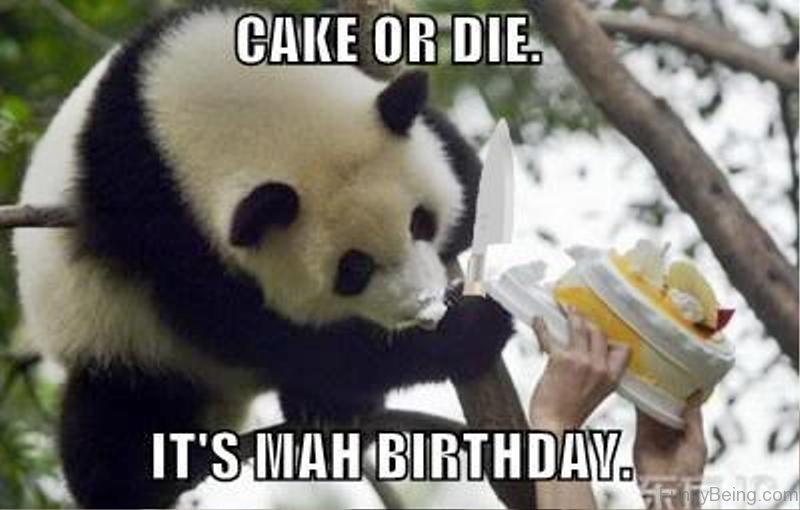 Cute Animals Eating Birthday Cake