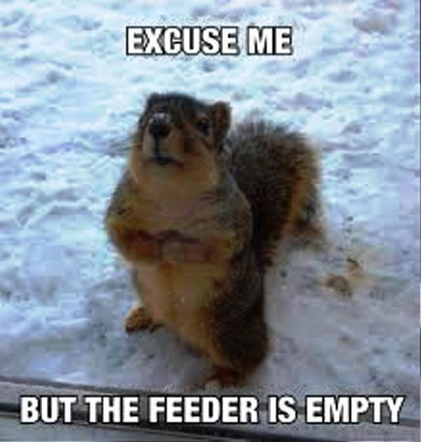 Excuse Me But The Feeder Is Empty