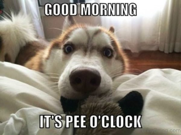 Good Morning Its Pee O Clock