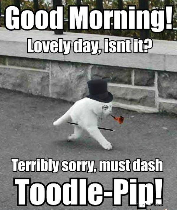 Good Morning Love Memes : Fresh good morning memes