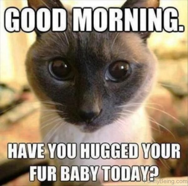 Have You Hugged Your Fur Baby Today