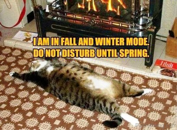 I Am In Fall And Winter Mode