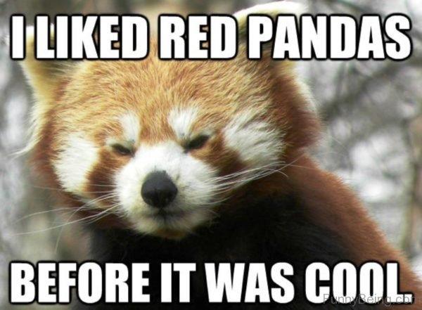 I Liked Red Pandas