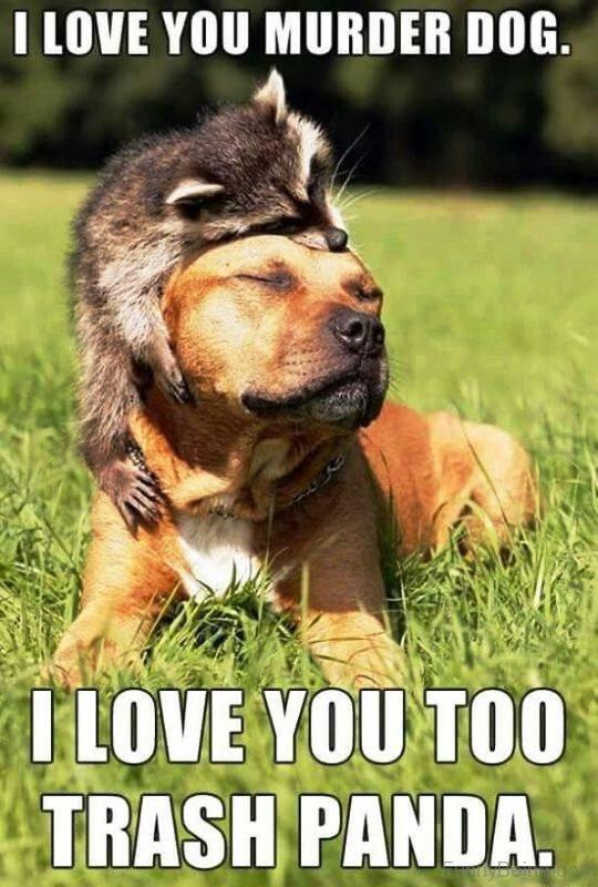 I Love You Murder Dog