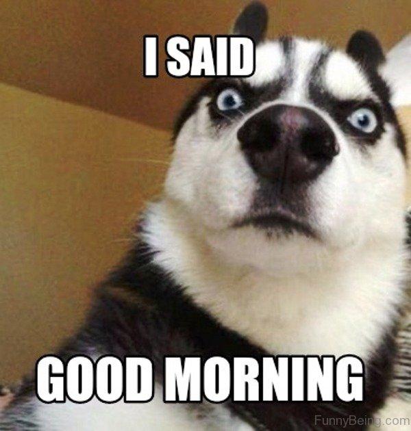 The Morning Funnys: 80 Fresh Good Morning Memes