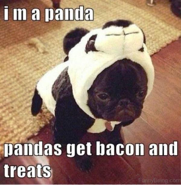 Im A Panda