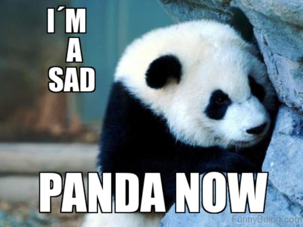 Im A Sad Panda Now