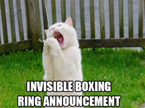 Invisible Boxing Ring Announcement