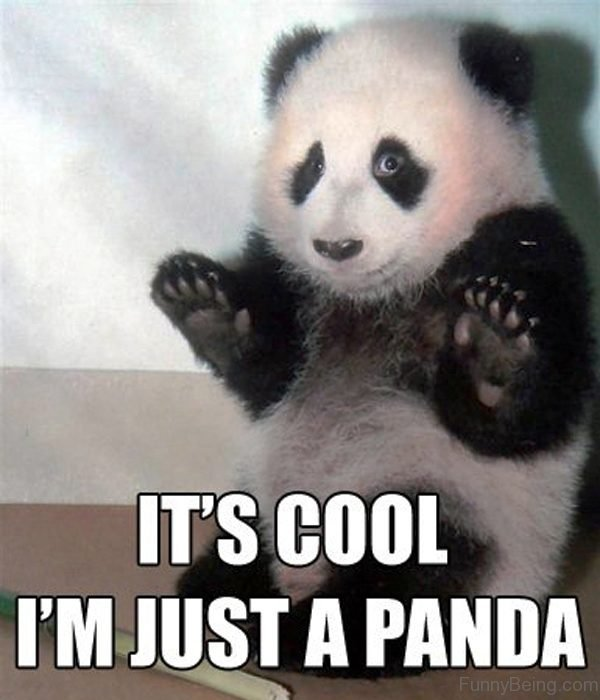 Its Cool Im Just A Panda