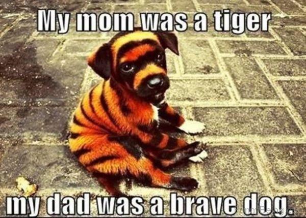My Mom Was A Tiger