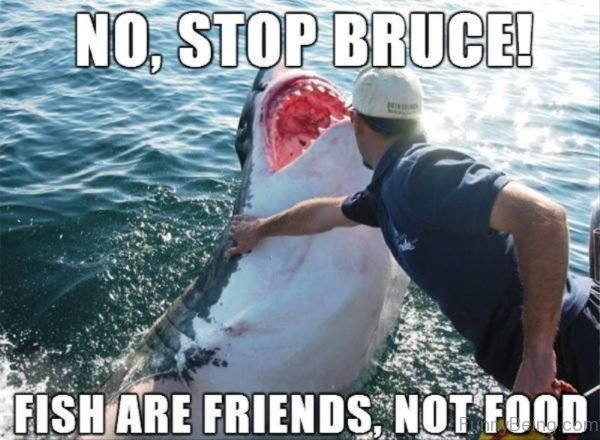 No Stop Bruce
