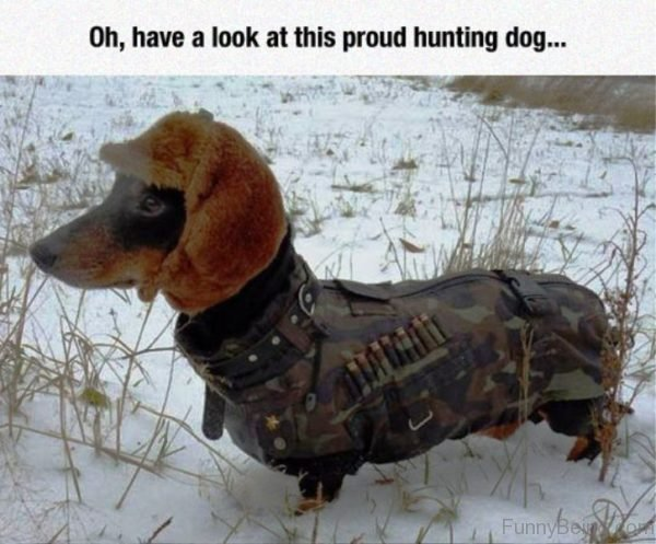Oh Have A Look At This Proud Hunting Dog