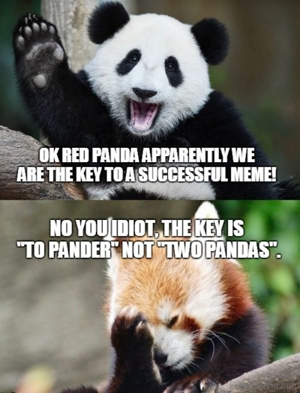 Ok Red Panda Apparently We Are The Key