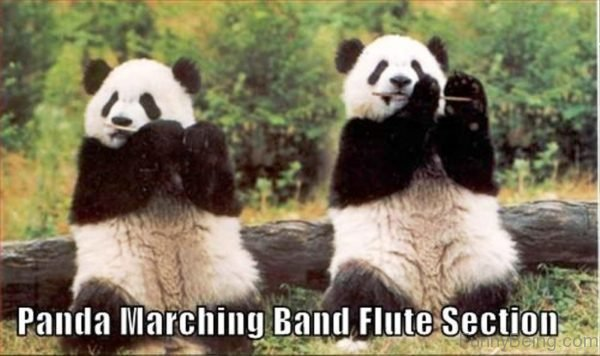 Panda Marching Band Flute Section