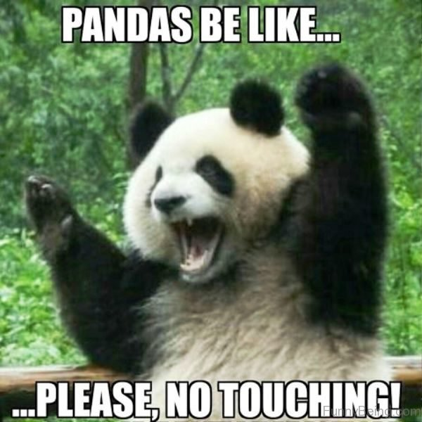 Pandas Be Like Please No Touching