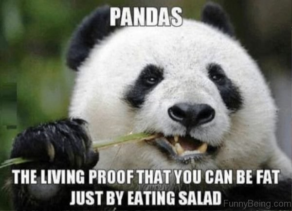 Pandas The Living Proof That You Can Be Fat