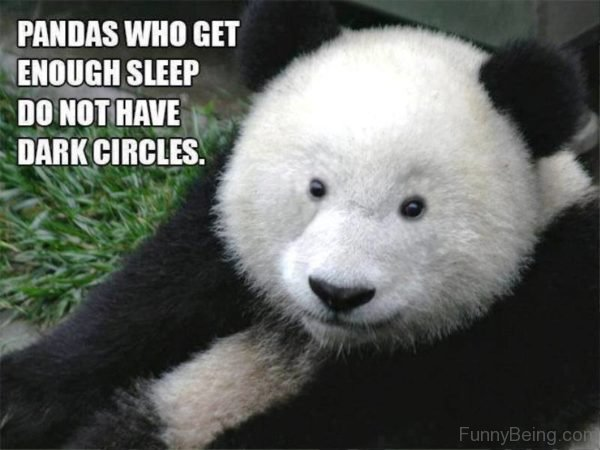 Pandas Who Get Enough Sleep