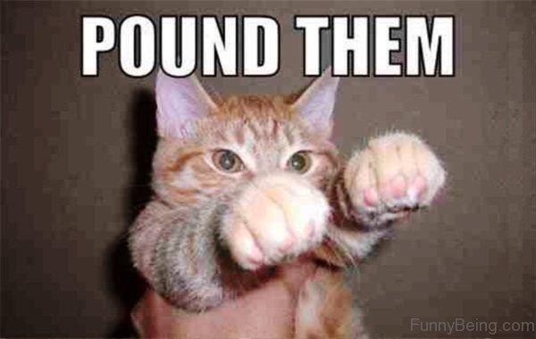 Pound Them