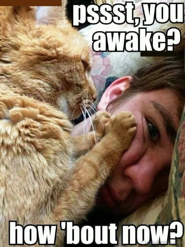Cute & Funny Good Morning Images and Memes with Animals |Good Morning Cat Meme