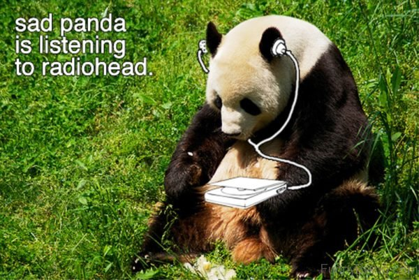 Sad Panda Is Listening To Radiohead