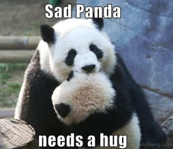 Sad Panda Needs A Hug