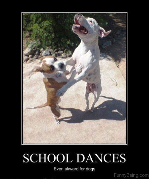 School Dances Even Akward For Dogs