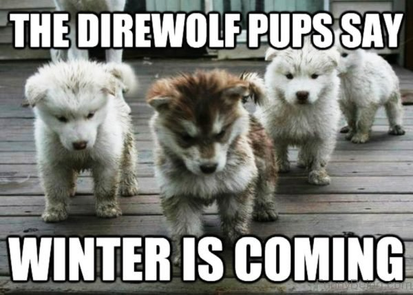 The Direwolf Pups Say