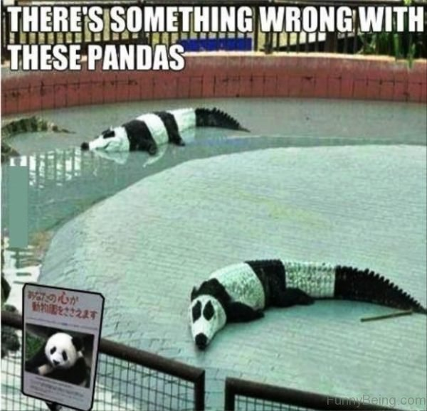 Theres Something Wrong With These Pandas