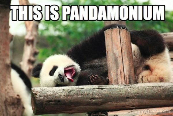 This Is Pandamonium
