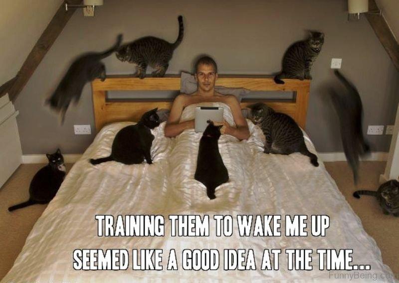 70 Funniest Good Morning Memes