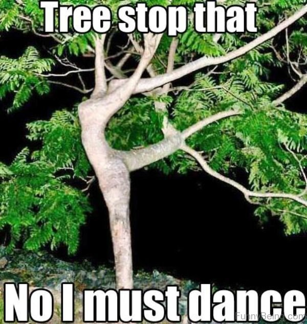 Tree Stop That No I Must Dance