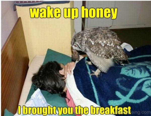 Wake Up Honey