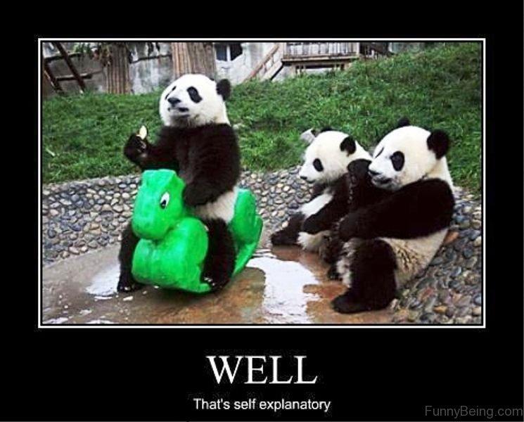 84 Stupid Panda Memes | 745 x 600 jpeg 75kB