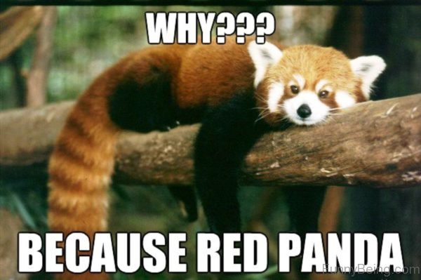 Why Because Red Panda