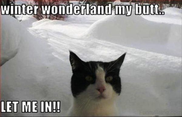 Winter Wonderland My Butt