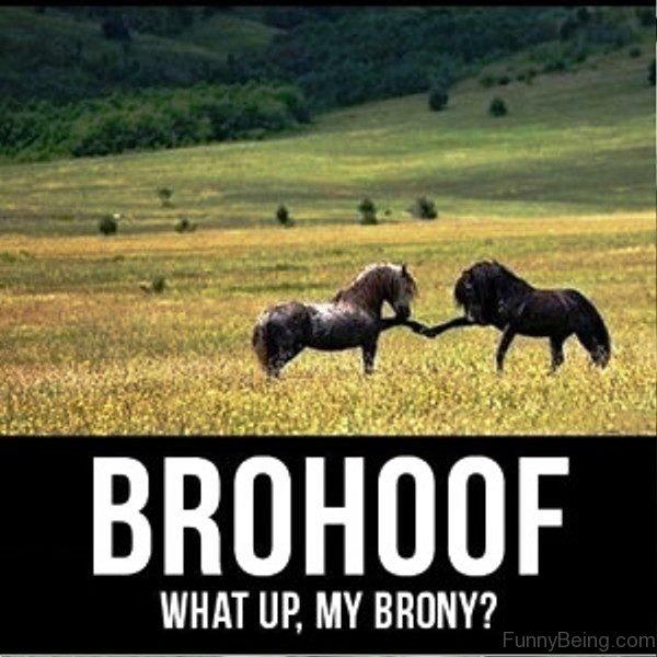 Brohoof What Up My Brony