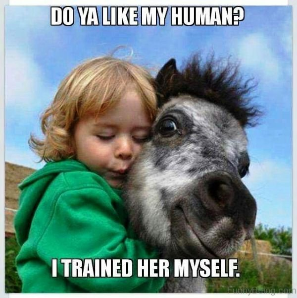 Funny Pony Quotes: 80 Mad Horse Memes Pictures