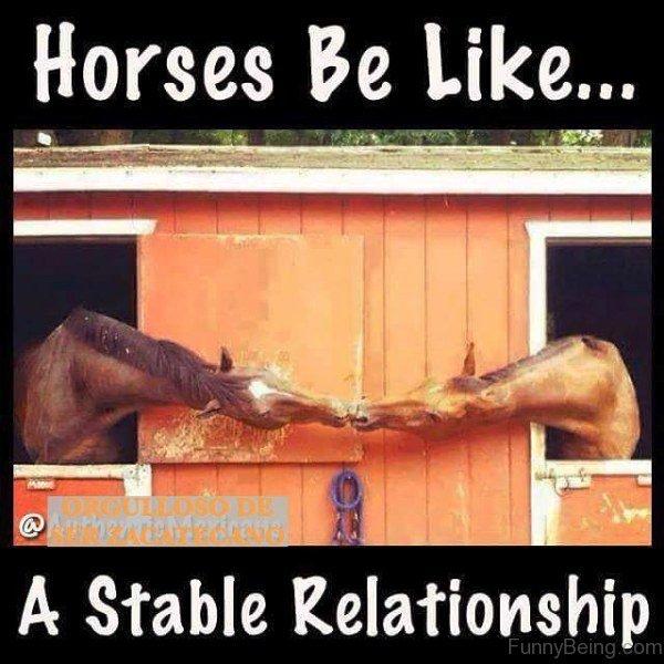 Horses Be Like